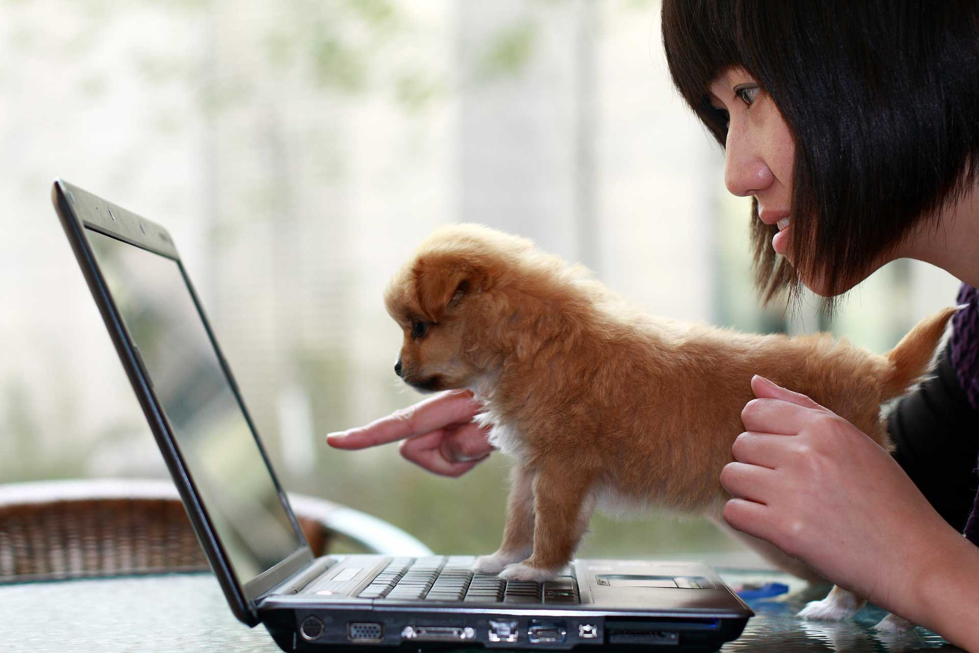 Woman with dog at computer